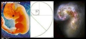 matematicas-y-feto