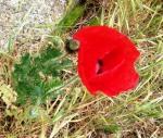 flor en el abismo